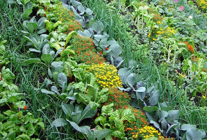 Why Permaculture Matters More Than Ever